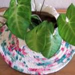 Hot Pad, Trivet, Plant, Can..