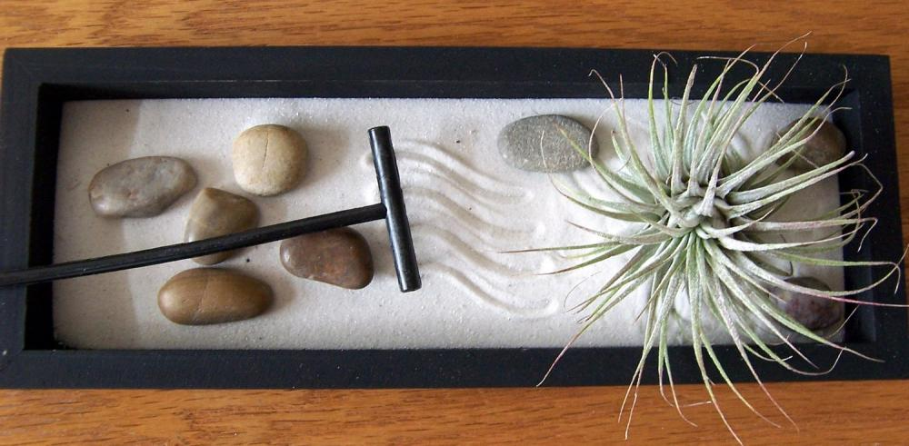 Tillandsia - SALE - 3 dollars off - Zen Garden with Tillandsia