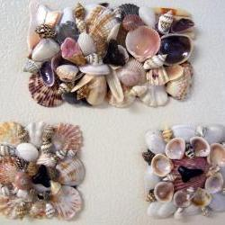 Sea Shells Kitchen Magnets with Sharks Teeth - Set of Three